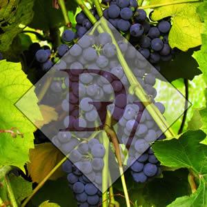DanInger Winery in Alma Wisconsin